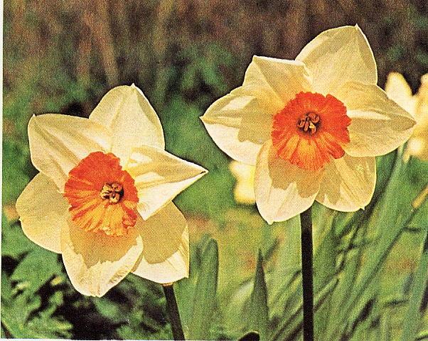 Tipi di fiori elenco tutti tipi di fiori gpsreviewspot for Tipi di fiori
